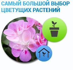 dzheyn-kupit-irkutsk-optovaya-prodazha-zhivih-tsvetov-v-krasnodare
