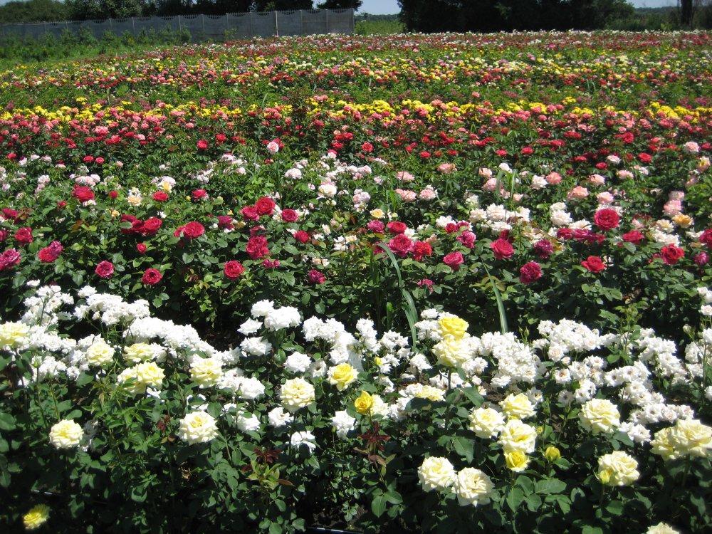 Наш сад цветов санкт петербург