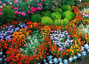 Оптовая продажа однолетних цветов