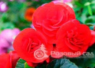 Цветы однолетники в Краснодаре недорого