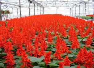 Краснодар цветы купить оптом горшки цветы балконные на крючках купить украина