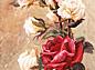 Правильные толкования значений цвета роз