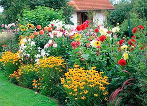 Растения для сада из питомника