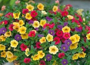 Купить цветы в краснодаре для сада лутшый подарок на 8 марта