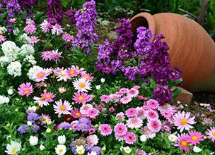 Многолетние цветы купить оптом