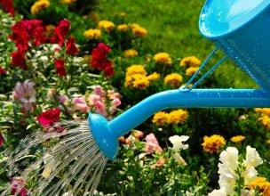 Уход за однолетними цветущими растениями