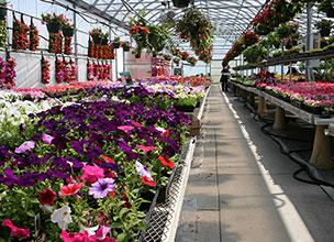 Купить цветы для оранжереи