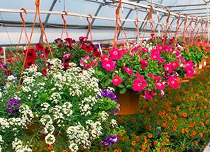 Питомники декоративных растений Краснодар