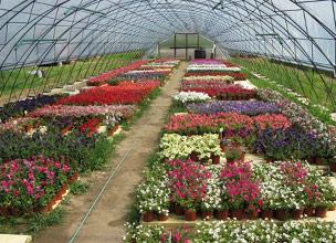 Купить растения в питомнике Краснодара