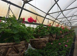Тепличный комплекс по продаже однолетних цветущих растений уже открыт!