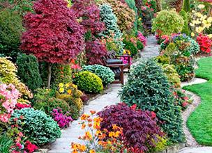 Декоративные растения для сада в Краснодаре
