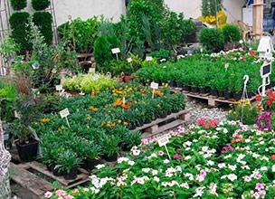 Оптовая продажа растений