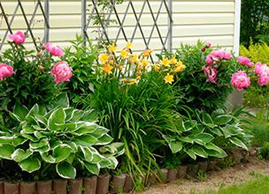Саженцы однолетних цветов купить