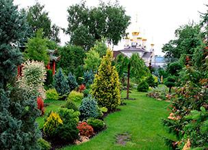 Питомник декоративных растений в Краснодаре