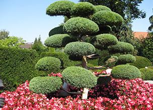 Декоративные растения питомник Краснодар