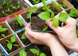 Растения на доращивание Краснодар