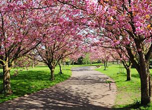 Цветущий сад Краснодар